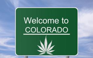 Zbiory konopi w Kolorado, thc thc.info