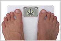 Medyczna Marihuana wiąże się ze zmniejszeniem otyłości, thc thc.info