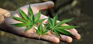 4 powody dlaczego użytkowanie marihuany jest pod kontrolą, thc thc.info