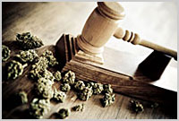Marihuana w Oregonie?, thc thc.info