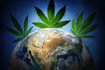 Kto może stosować medyczną marihuanę?, thc thc.info