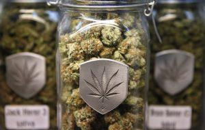 DEA staje po stronie marihuany; marihuana może być wkrótce wykorzystywana do leczenia PTSD, thc thc.info