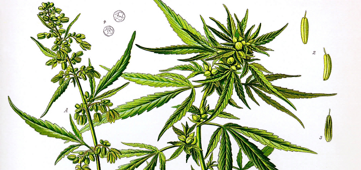 Legalność marihuany w zależności od kraju, thc thc.info