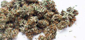 Naukowcy uważają, że pigułka zawierająca marihuanę może skutecznie leczyć PTSD, thc thc.info