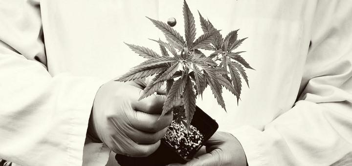 Badanie: Wpływ marihuany na pamięć, thc thc.info