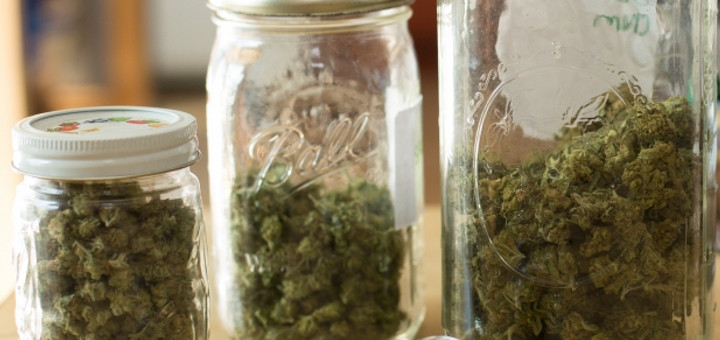 Health Canada i medyczna marihuana, thc thc.info