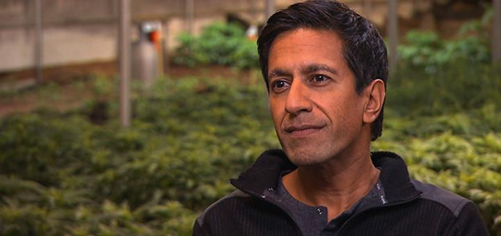 Doktor Sanjay Gupta mówi o stosowaniu marihuany, waporyzatorów i produktów spożywczych zawierających marihuanę, thc thc.info