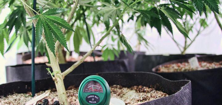Lekarze obawiają się nowego prawa dotyczącego medycznej marihuany, thc thc.info