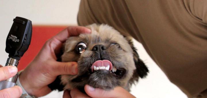 Marihuana dla zwierząt domowych: trucizna czy medycyna?, thc thc.info