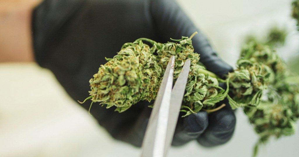 Sześć stanów w USA, które planują legalizację marihuany, thc thc.info
