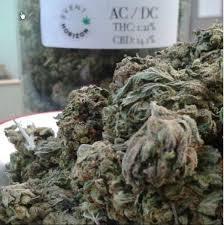 10 ciekawostek o uprawie marihuany, thc thc.info