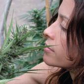Amerykański rynek cannabis jest warty 53 miliardy dolarów, thc thc.info