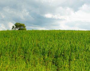 Ustawa zniesie federalny zakaz marihuany, thc thc.info