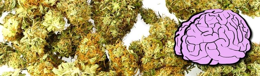 Depresja i medyczna marihuana, thc thc.info