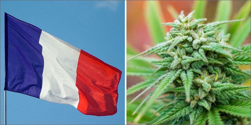 Марихуана легализация франция как с марихуаной в амстердаме