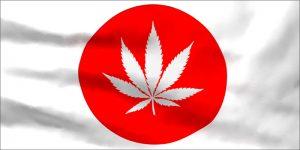 Odkryto nasiona prehistorycznej marihuany, thc thc.info