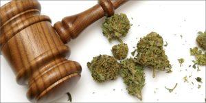 Polska to najnowszy kraj europejski, który zalegalizował medyczną marihuanę, thc thc.info