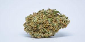 Argentyna legalizuje medyczną marihuanę, thc thc.info