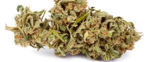 Jak stosować marihuanę do regeneracji, thc thc.info