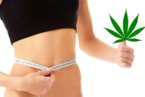 Chudnij paląc marihuanę, thc thc.info