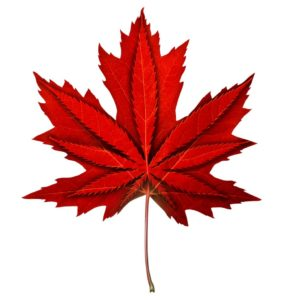 W Kanadzie kończy się marihuana, thc thc.info