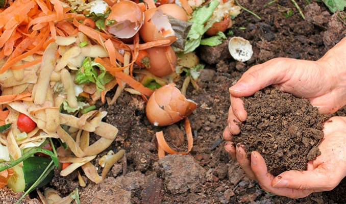 Cannabis i domowy kompost, thc thc.info