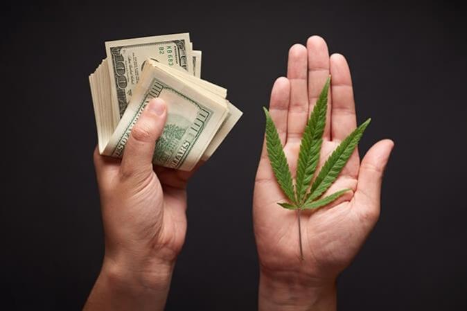 Jak wykryć zanieczyszczoną marihuanę?, thc thc.info