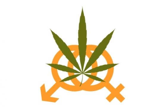 Informacje na temat cannabis oraz konopi, thc thc.info
