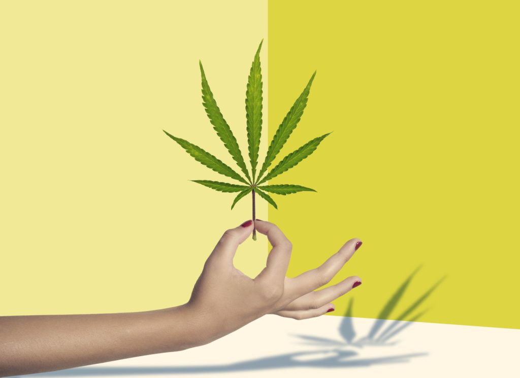 Rekreacyjna marihuana w Meksyku, thc thc.info