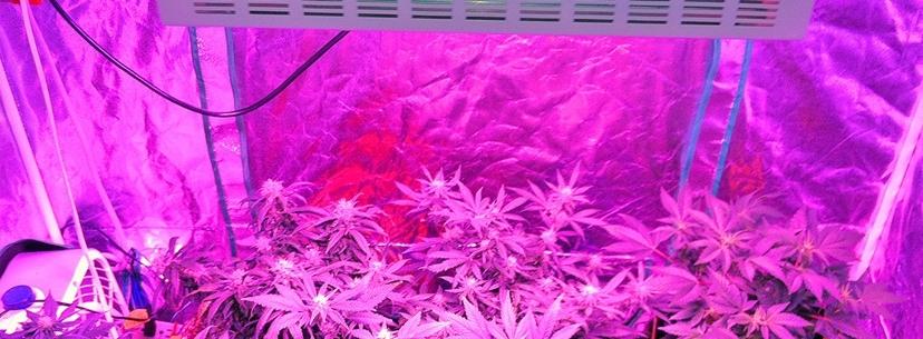 Czy Marihuana Zwiększa Kreatywność?, thc thc.info