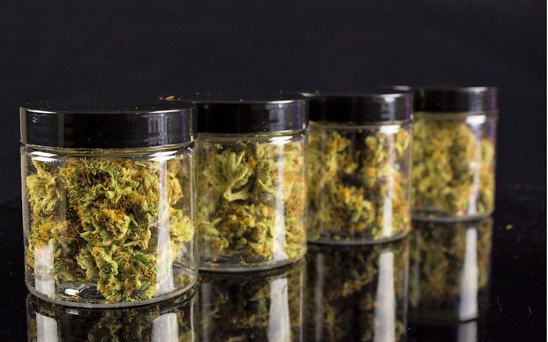 Czy Purpurowe Pąki Marihuany są Lepsze?, thc thc.info