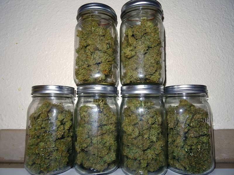 Konserwowanie Pąków Marihuany, thc thc.info